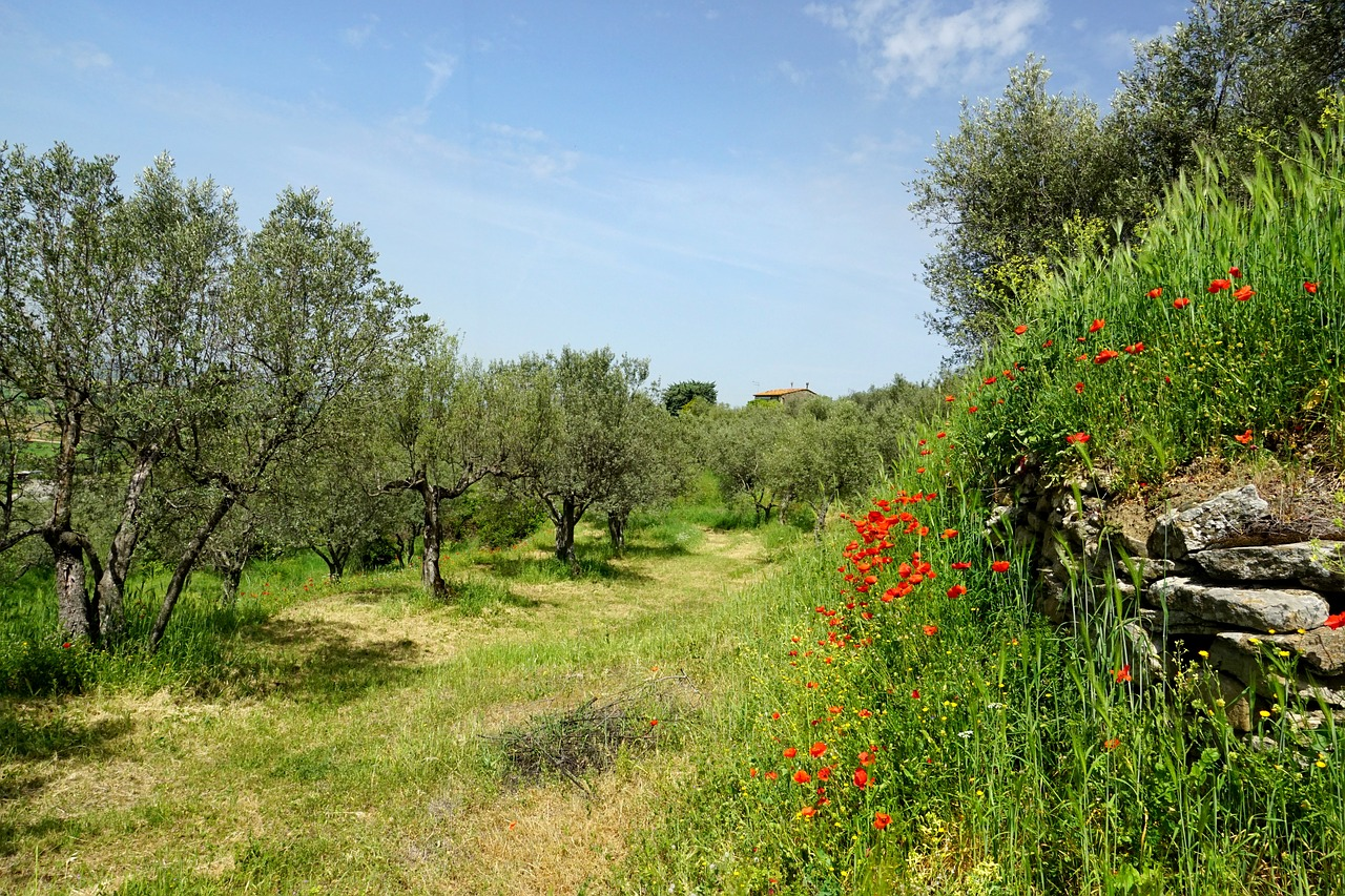 olive gardens