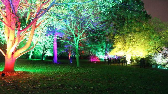 Enchanted Forest at Syon Park